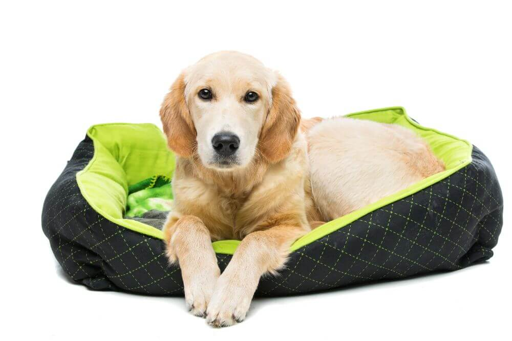 How to Wash Dog Beds: A Step-by-Step Guide