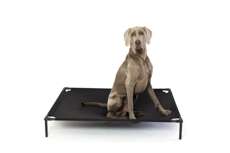 Kuranda Dog Bed Review