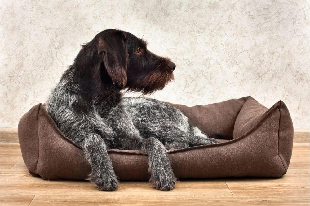 K9 Ballistics Dog Bed Review