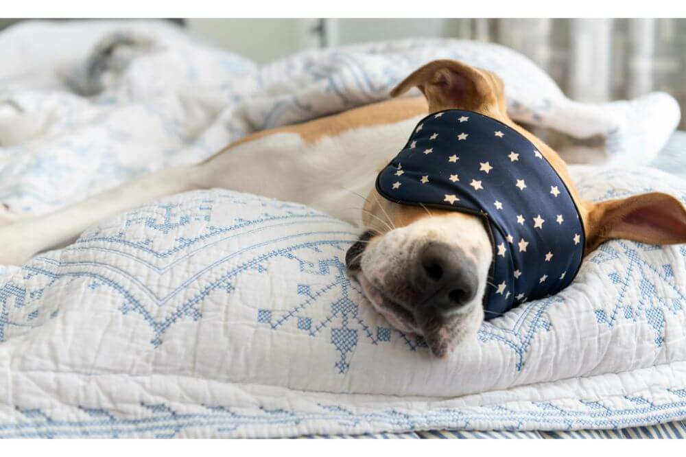 Best Dog Beds for Large Dogs of 2020: Top 5 Recommendations