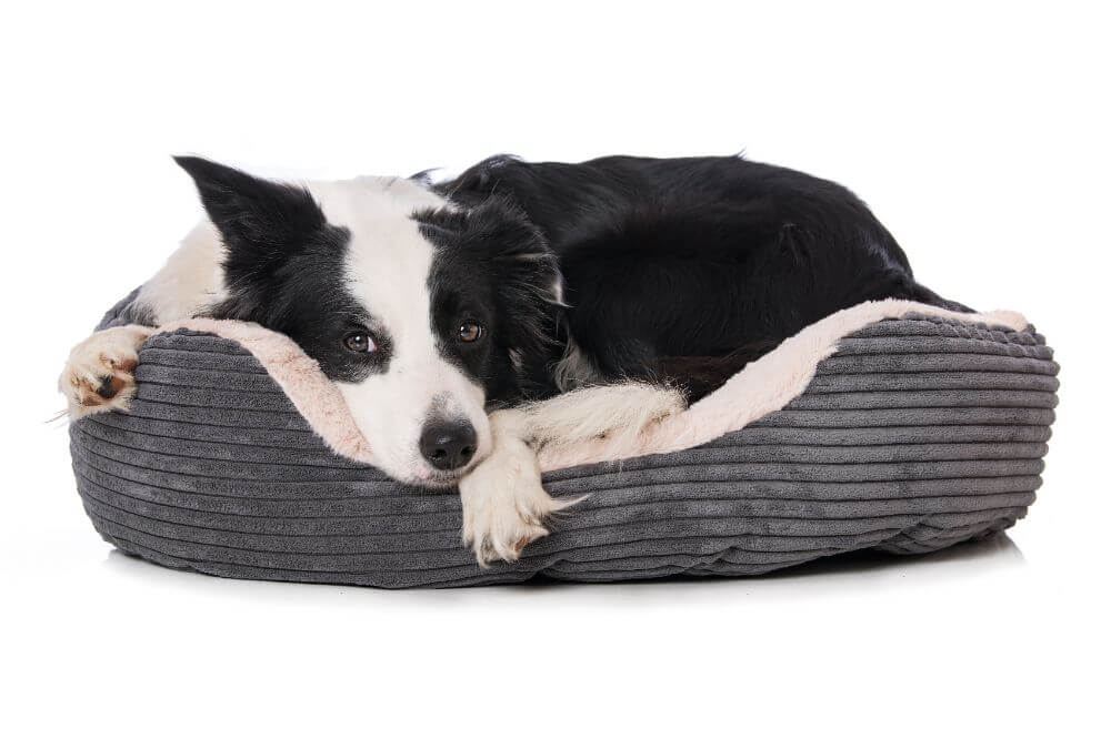 How to Clean a Dog Bed Without a Removable Cover