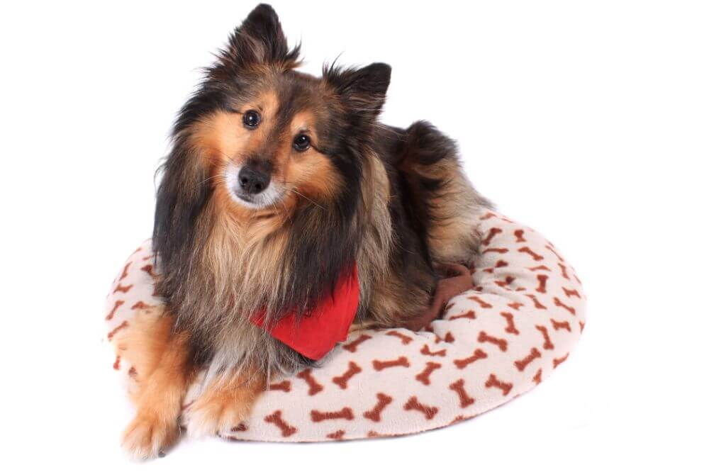 Best Dog Beds of 2020: Complete Reviews with Comparison