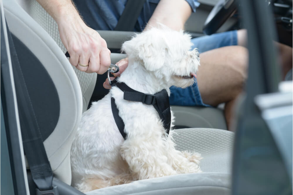 The Best Dog Harnesses for Car Rides