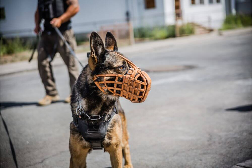 Reviews of the Best Tactical Dog Harnesses