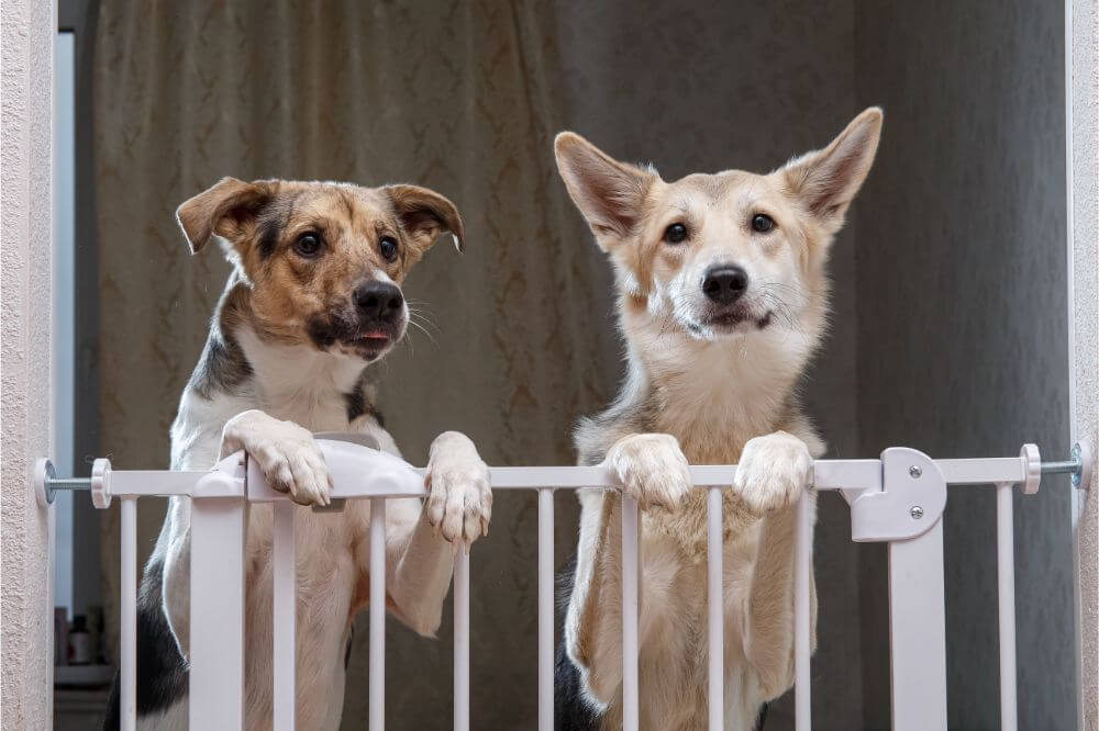 The Best Dog Gates For Dog Training​